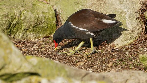 Animals, Birds, Humboldt, Marwell Zoo, Penguin - 09/12/2017