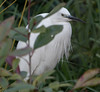 Animals, Birds, Egret, Marwell Zoo @ Colden Common, City of Winchester,England