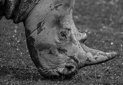 Cotsworld Wildlife Park - Thu 16/07/2020@10:42