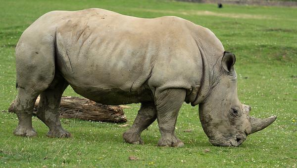 Cotsworld Wildlife Park - Thu 16/07/2020@10:41