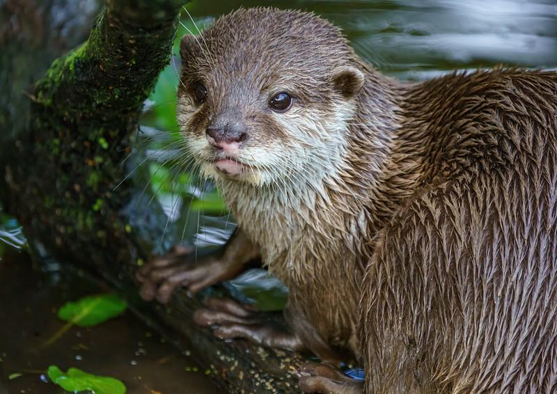 Marwell Zoo, Topaz AI Sharpen - 19/10/2019@13:00