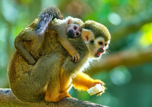 Marwell Zoo, Topaz AI Adjust, Topaz AI Sharpen - 19/10/2019@12:25