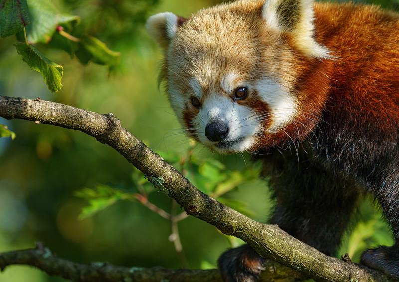 Marwell Zoo, Topaz AI Sharpen - 19/10/2019@14:04