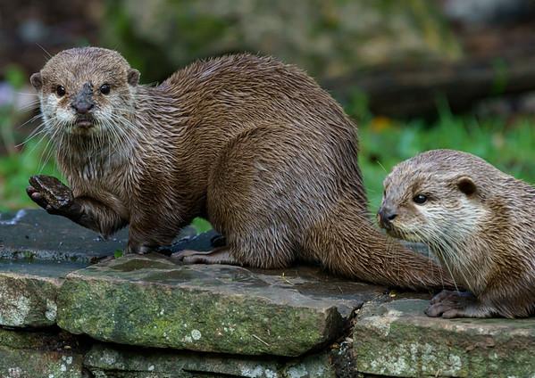 Marwell Zoo - 19/10/2019@13:12