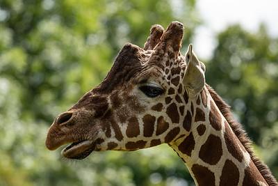 Whipsnade Zoo, Zoo - Mon 03/08/2020@11:19