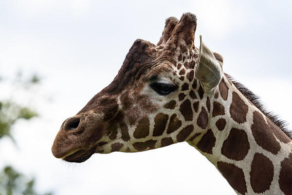 Whipsnade Zoo, Zoo - Mon 03/08/2020@11:21