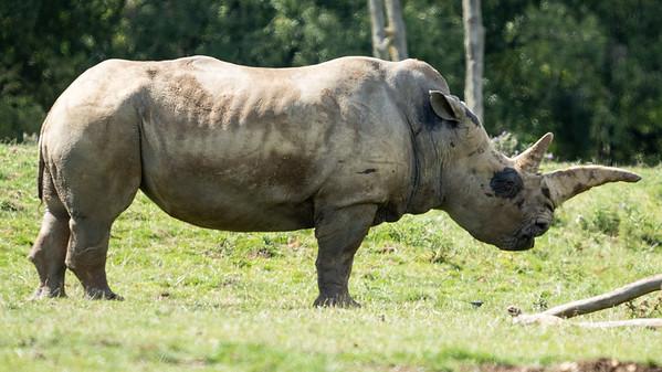 Whipsnade Zoo, Zoo - Mon 03/08/2020@10:48