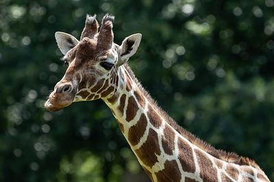 Whipsnade Zoo, Zoo - Mon 03/08/2020@11:15