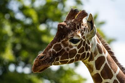 Whipsnade Zoo, Zoo - Mon 03/08/2020@11:16