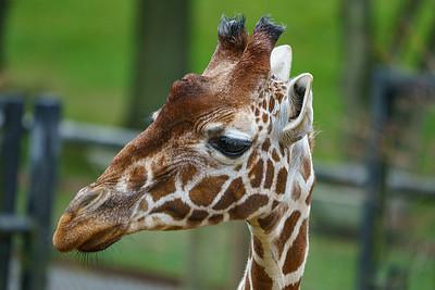 Whipsnade Zoo, ZSL - 07/10/2019@10:49