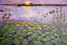 <b>Everglades Evening</b> Honorable Mention <i>- Karen Rosenblatt</i>