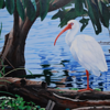 <b>White Ibis</b> Honorable Mention <i>- Tykie Ganz</i>