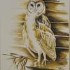 <b>Barn Owl</b> <i>- Holly Rutchey</i>