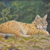 <b>Florida Bobcat</b> <i>- Carole Z. Williams</i>