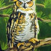 Great Horned Owl in Pine Tree