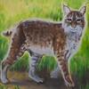 Strolling Bobcat