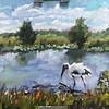 The Stalking Stork