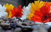 "Rock Garden by <a href=""http://www.photographycorner.com/forum/member.php?u=11316"">aheart2heart</a>"