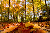 "Fallen Colours by <a href=""http://www.photographycorner.com/forum/member.php?u=3565"">Spicoli</a>"