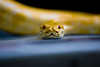 "Snake vs. Photographer by <a href=""http://www.photographycorner.com/forum/member.php?u=15180"">jonah_kessel</a>"