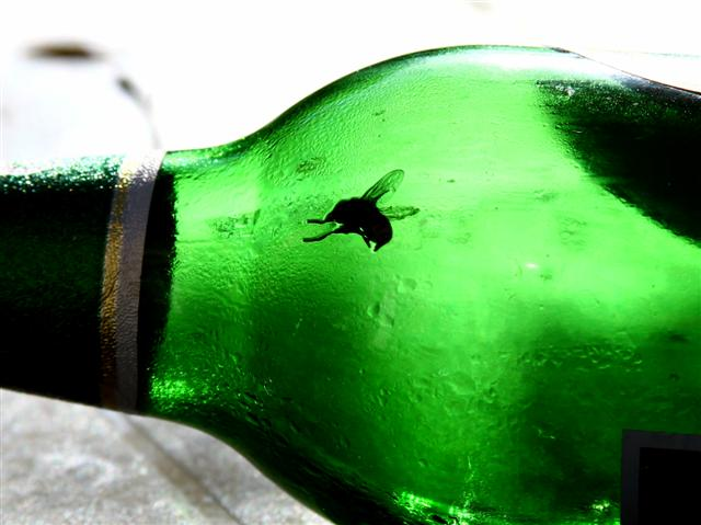 """Anything for a Beer by <a href=""""http://www.photographycorner.com/forum/member.php?u=5717"""">lucipaz</a>"""