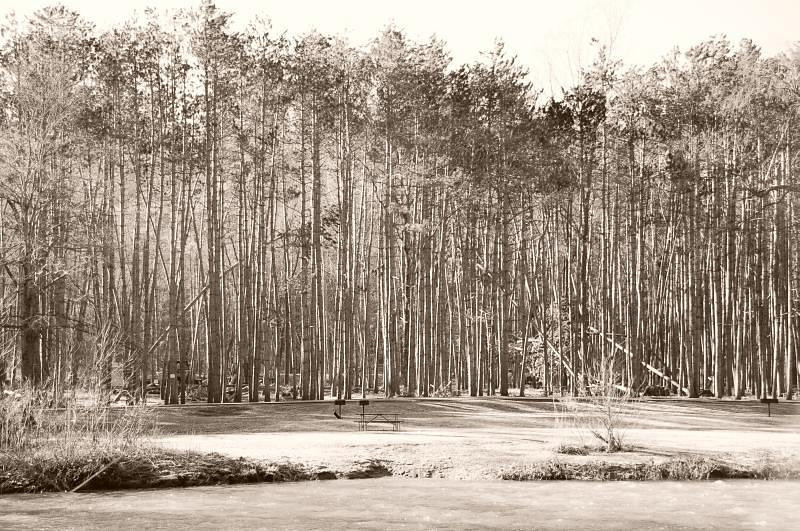 """Trees of Beaver Creek by <a href=""""http://www.photographycorner.com/forum/member.php?u=8163"""">jlwr1958</a>"""