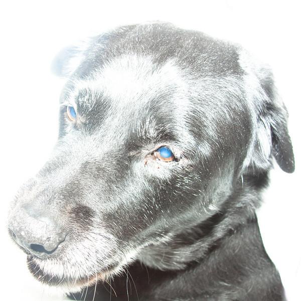 "Old Dog by <a href=""http://www.photographycorner.com/forum/member.php?u=8177"">jasonreusch</a>"