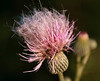 "Bad Hair Day by <a href=""http://www.photographycorner.com/forum/member.php?u=7926"">bugsman</a>"