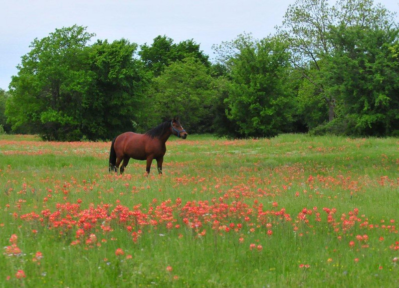 "Field of Indian Paintbrush by <a href=""http://www.photographycorner.com/forum/member.php?u=5262"">Easter joy</a>"