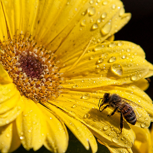 """Sweet Nectar by <a href=""""http://www.photographycorner.com/forum/member.php?u=14559"""">cup4tml</a>"""