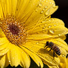 "Sweet Nectar by <a href=""http://www.photographycorner.com/forum/member.php?u=14559"">cup4tml</a>"