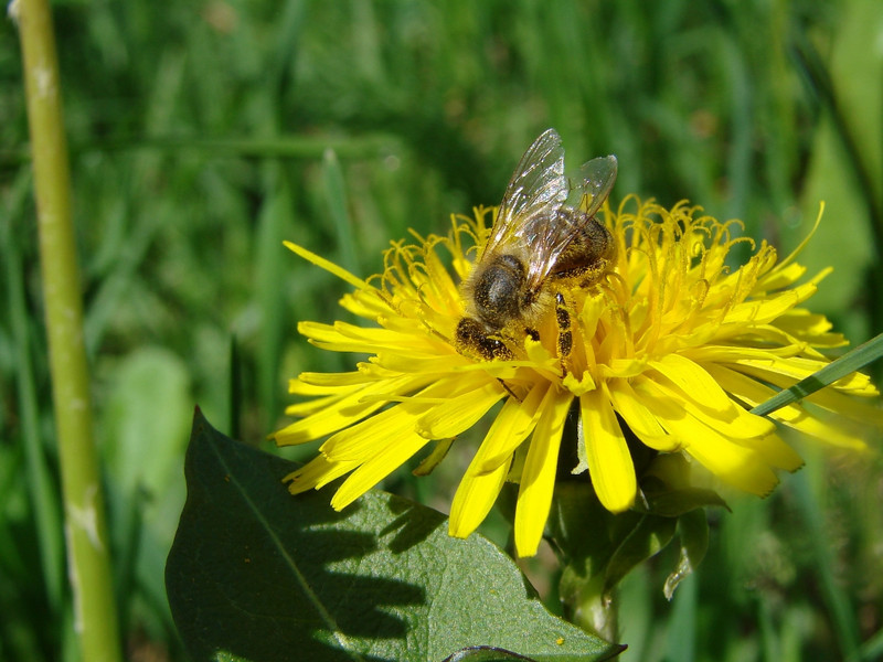 """Busy as a Bee Can Be by <a href=""""http://www.photographycorner.com/forum/member.php?u=17196"""">melikamy</a>"""
