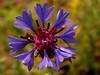 """Springtime by <a href=""""http://www.photographycorner.com/forum/member.php?u=17129"""">parastoooo</a>"""