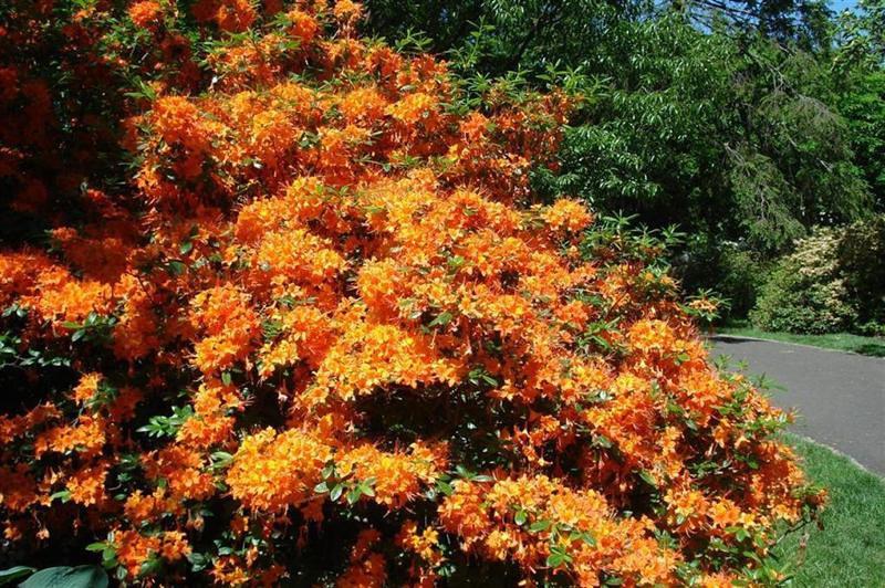 "Orange Beauty by <a href=""http://www.photographycorner.com/forum/member.php?u=12187"">krickett1</a>"