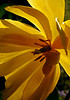 "Yellow by <a href=""http://www.photographycorner.com/forum/member.php?u=11850"">Kot</a>"
