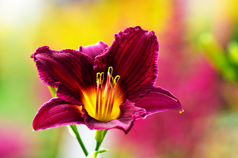 "Lilly Days by <a href=""http://www.photographycorner.com/forum/member.php?u=14529"">erkie</a>"