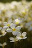 "Teeny Tiny by <a href=""http://www.photographycorner.com/forum/member.php?u=9271"">wohlerperc</a>"