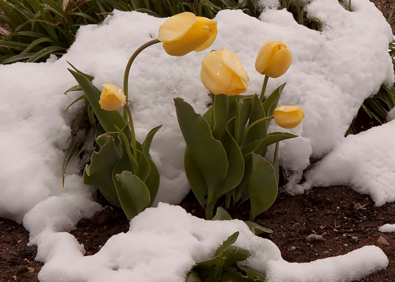 """Flowers in Snow by <a href=""""http://www.photographycorner.com/forum/member.php?u=2511"""">Msnow</a>"""