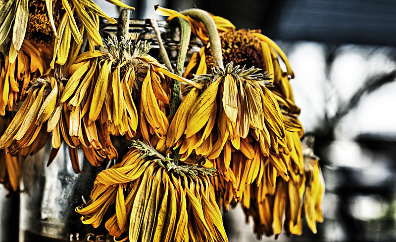 """Aging Gracefully by <a href=""""http://www.photographycorner.com/forum/member.php?u=11677"""">Beemer B773ER</a>"""