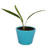 Original Photo - Plant