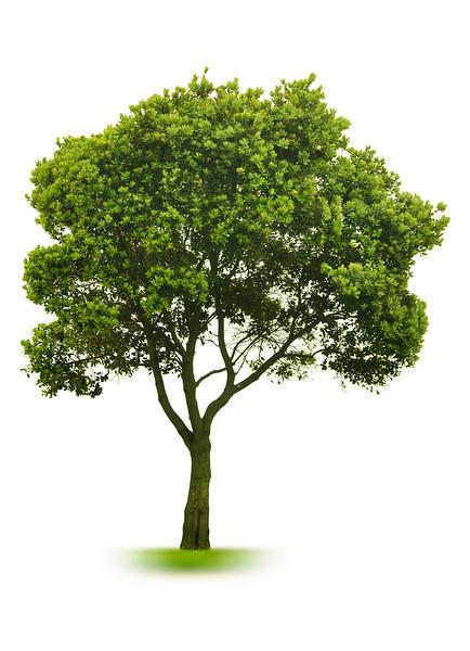Original Photo - Tree