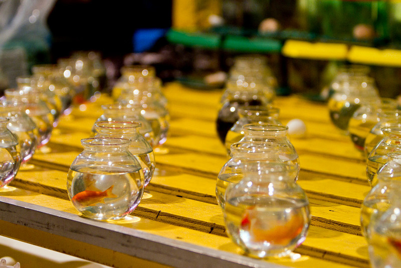 """CCC78-26 - Goldfish at the Fair by <a href=""""http://www.photographycorner.com/forum/member.php?u=18126"""">andreasx</a>"""