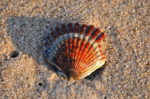 CCC79-25 - Ocean Shell by TA Lowery