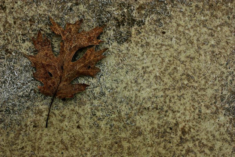 The Last Leaf by pinkangel