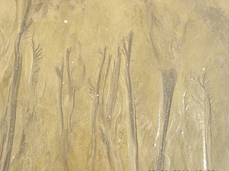 Sea Sand Pattern by manjitsinghbhui