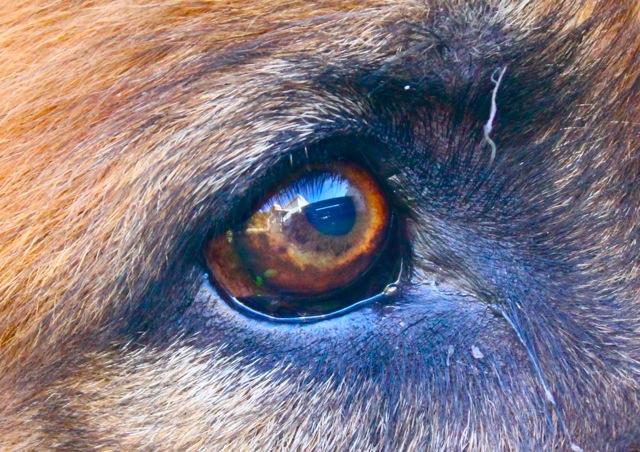 CCC83-02 - Through Their Eyes by Sillar