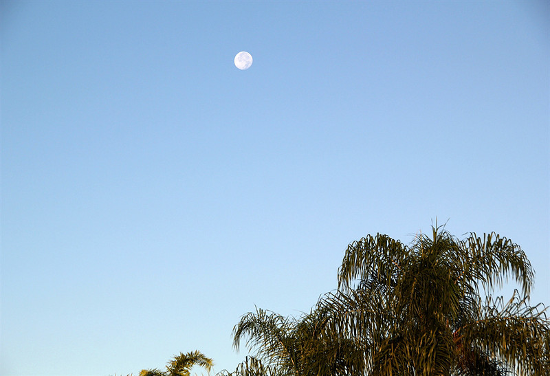 CCC83-26 - Catching the Day Moon in the Background by Doreen_Baer
