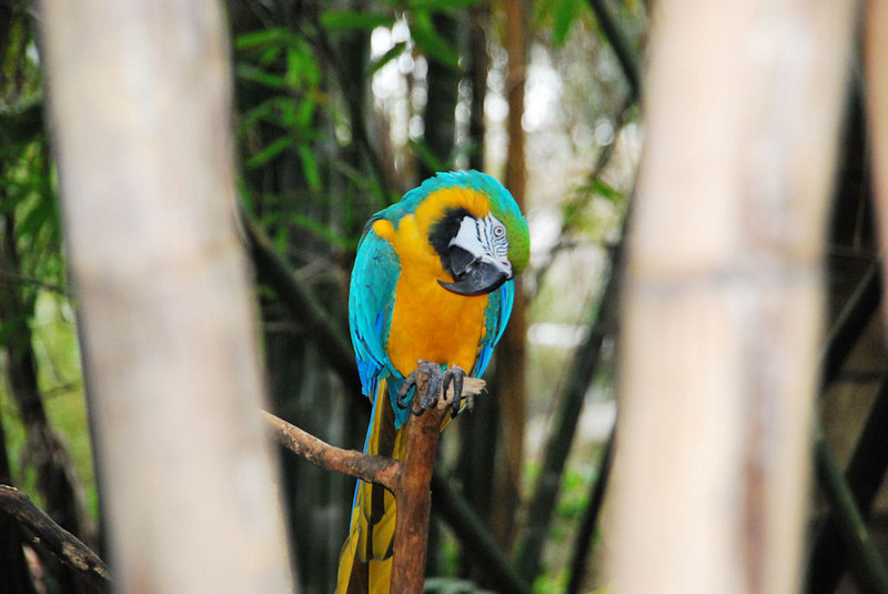 CCC83-15 - Macaw by LiseHebert