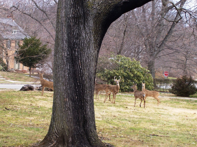 CCC84-12 - Tree Lines and Five Deer by Stihl95