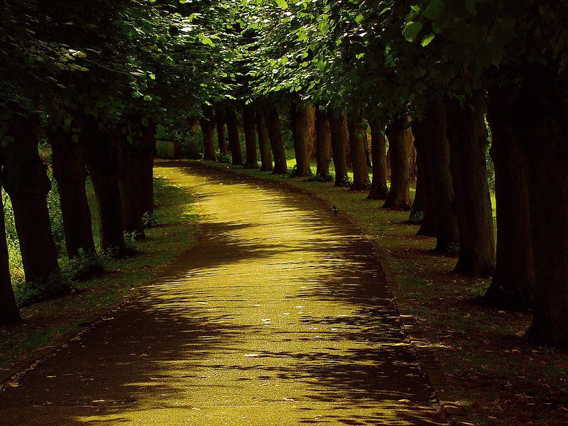 CCC89-18 - The Yellow Path by Patruchi